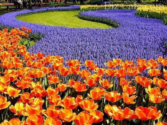 фото бордюрных цветов: