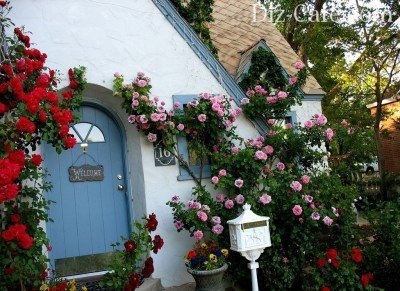 Плетущиеся розы на стене