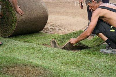 Укладка рулонов газона