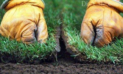 Устройство рулонного газона: технология укладки и выращивания зеленого ковра