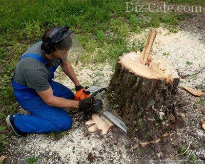 как убрать корень дерева