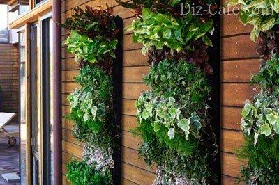 Вертикальное озеленение стены