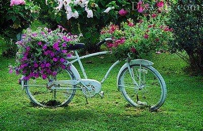Старый велосипед, украшенный живыми шапками из петуний