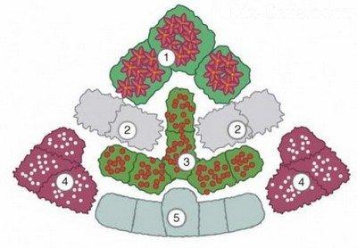 Схема угловой клумбы