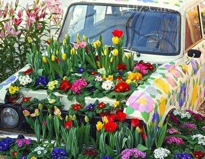 Пестрая компания весенних первоцветов в необычном цветнике
