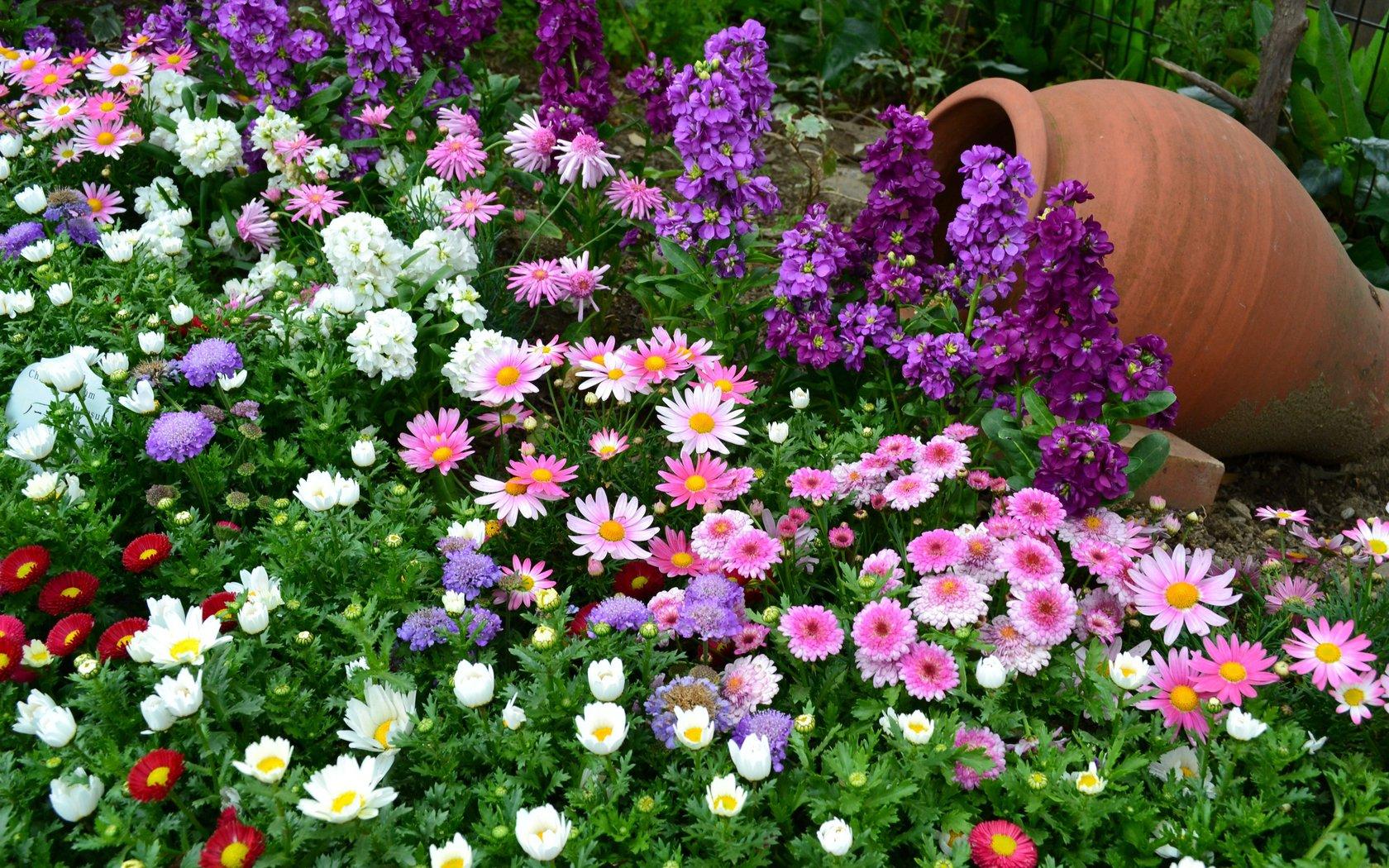 Фиолетовые цветы на клумбе