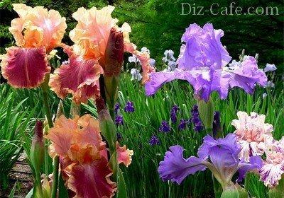 Картинки цветов которые садят осенью