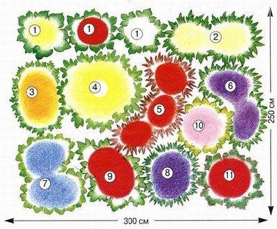 План расположения растений в цветнике