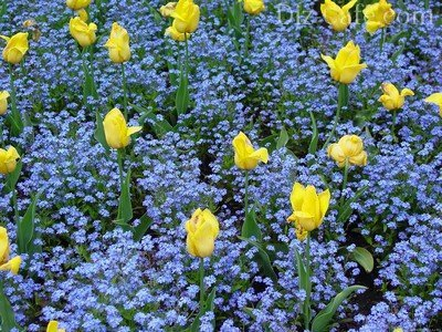 Цветы газонные