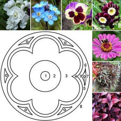 Схема оформления клумбы «Венский цветок» с подбором растений