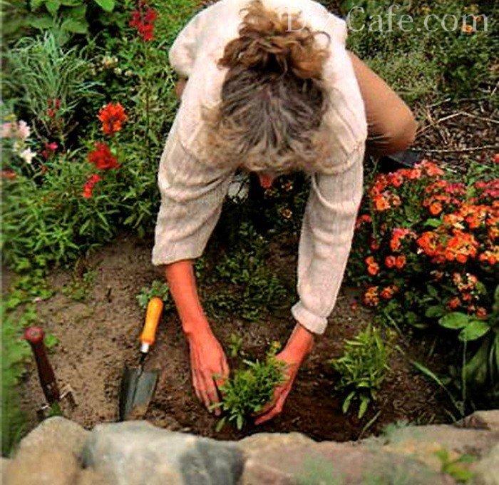 Что можно посадить и посеять под