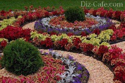Цветы на клумбе
