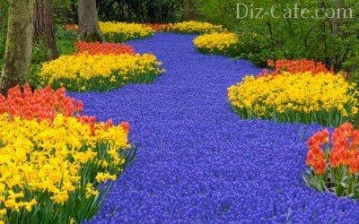 Нарциссы, тюльпаны, мускари