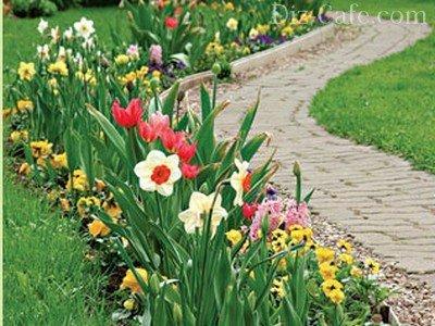 Первоцветы и весеннецветущие луковичные