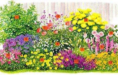 Пестрая композиция с растениями длительного цветения