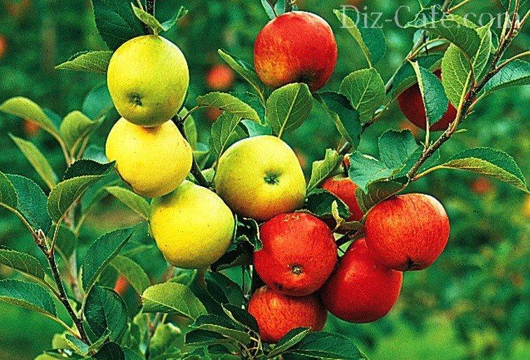 Дизайн плодовых деревьев на участке