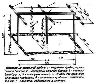 Схема шпалеры для огурцов