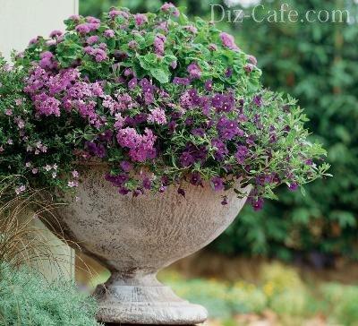 Цветы для вазонов на даче: какие цветы лучше посадить в вазонах?