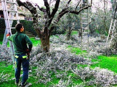 Правила обрезки плодовых деревьев в различные времена года