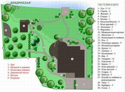 Дендроплан загородного участка