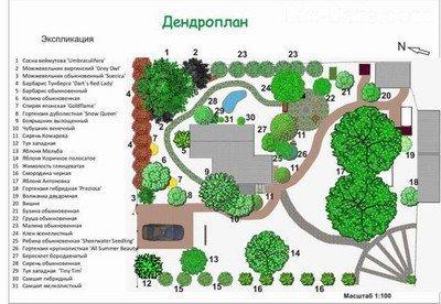 Дендроплан садового участка в масштабе 1:100