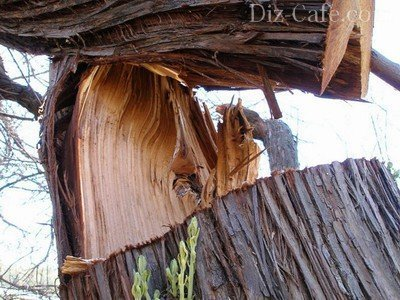 Вырубка деревьев на садовом участке
