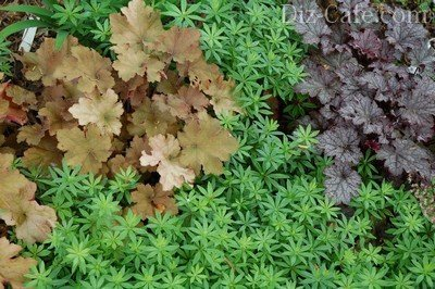 Декоративность листвы тенелюбивых растений