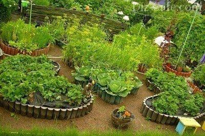 Оригинальные овощные клумбы