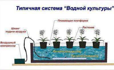 Что такое гидропоника для цветов