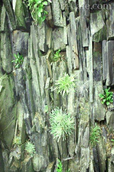 Растения для альпинария чешская скалка