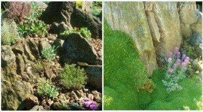 Методика посадки растений на альпийскую горку чешская скалка