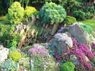 Высадка альпийских растений на каменную горку - чешскую скалку