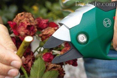 Как выбрать садовый секатор для обрезки деревьев (для прививки и пр