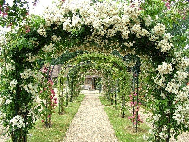 Арки для плетистых роз своими руками