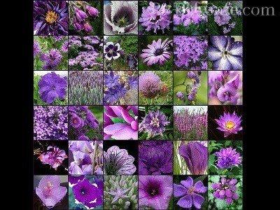 Фиолетовое разнообразие растений