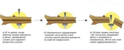 Секатор для обрізки кущів