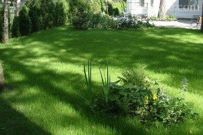 Теневыносливые растения для сада фото и названия