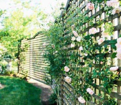 Забор - шпалерная изгородь