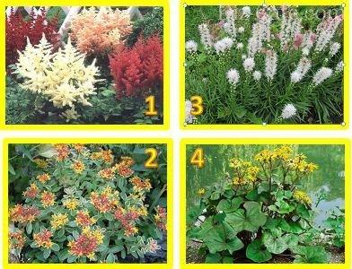 Садовые цветы почтой для сибири купить где купить дешевые цветы в челябинске