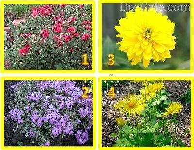 Многолетние цветы для севера