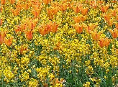 Желто-оранжевая клумба