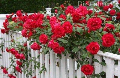 Украшенный розами декоративный забор