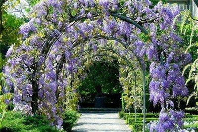 Красивая арка вдоль аллеи сада