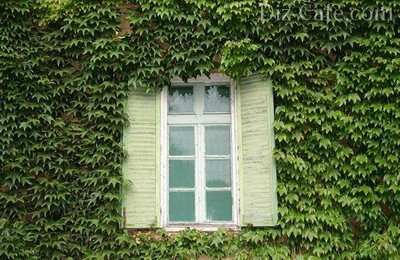Стены дома, укрытые ковром из плюща