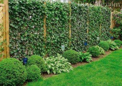 Увитый зеленью забор
