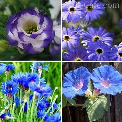 Насіння однорічних квітів квітучих все літо
