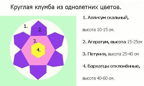 Схема клумбы из однолетников