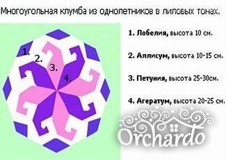 Схема 2 однолетники