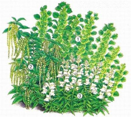 Зелено-белый цветник из однолетников