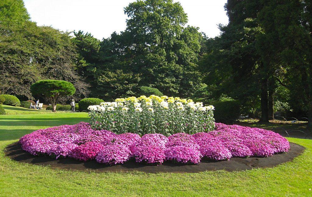 Букеты мужчинам, купить самые красивые цветы для саду